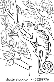 Coloring pages. Wild animals. Little cute chameleon sits on the tree branch and looks at the fly.