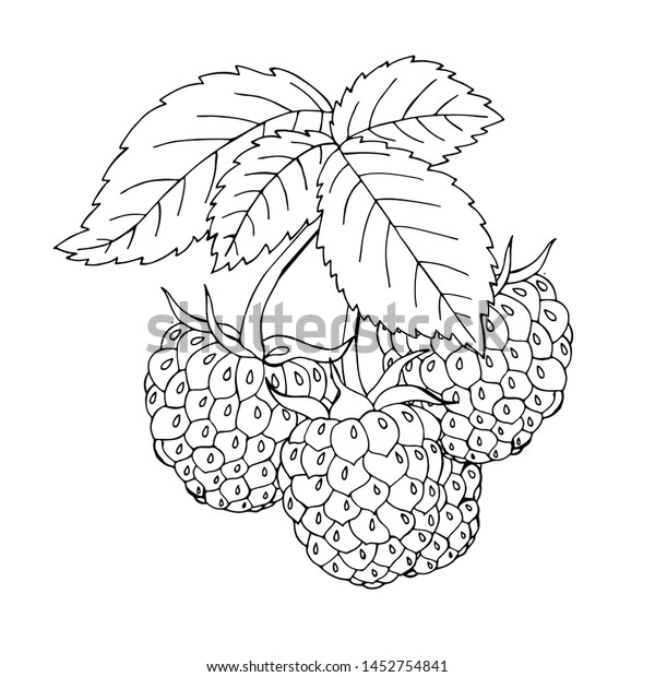 Coloring Template Black Line Berry Printable Stock Vector Royalty Free 1452754841