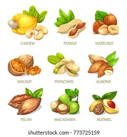 Colourful sketch of different kinds of nuts. Vector isolated kernels collection. Realistic outline icons can use for a logo, emblem creation or for a recipe of vegetarian nutrition.