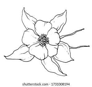 Columbine aquilegia northern flower blossom. Isolated vector botanical illustration: retro, vintage, hand drawn, black and white, outline. For wedding invitation, card, print, tattoo. Japanese style.