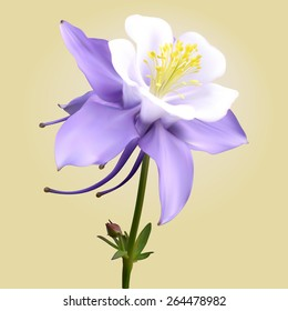 Columbine Flowers Images Stock Photos Vectors Shutterstock