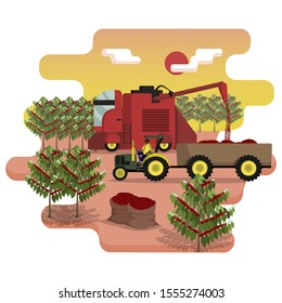 Combine harvester is harvest the coffee berries on plantation. Agricultural machinery. Tractor with a trailer loaded with coffee. Farm work. Flat cartoon vector illustration
