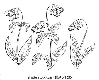 Comfrey flower graphic black white isolated sketch set illustration vector