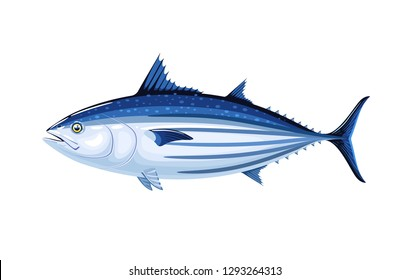 Commercial fish species. Skipjack tuna. Vector illustration cartoon flat icon isolated on white.