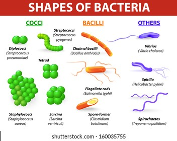 Common bacteria infecting human. vector illustration Bacteria are classified into 5 groups according to their basic shapes: cocci, bacilli, spiral (spirilla), vibrios or corkscrew (spirochaetes).