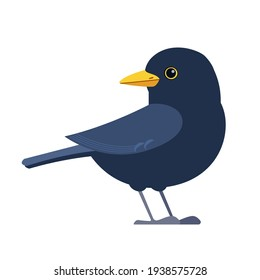 Common blackbird is a species of true thrush. It is also called Eurasian blackbird. Scientific name: Turdus merula. Cartoon flat style character of ornithology, vector illustration isolated on white.