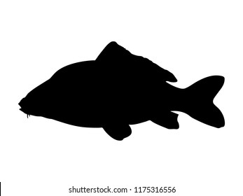 Common carp silhouette. Vector illustration.