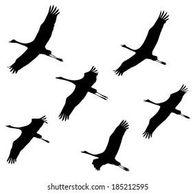 Common Crane in flight silhouettes