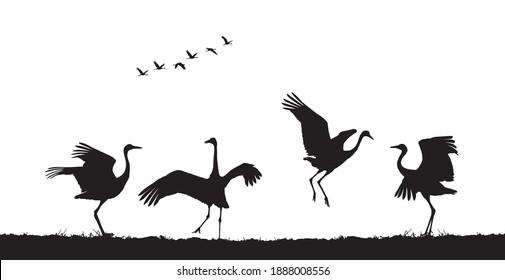 Common cranes dance in field. Vector silhouette
