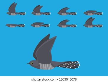 Common Cuckoo Flying Motion Animation Sequence Cartoon Vector Illustration