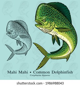 Common Dolphinfish, Mahi Mahi. Vector illustration with refined details and optimized stroke that allows the image to be used in small sizes.