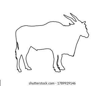 Common eland line contour, or Southern eland, or Eland antelope. Wild male antelope vector isolated on white background. (Taurotragus oryx) zoo attraction from Africa.