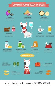 Common foods toxic to dogs infographic.vector illustration