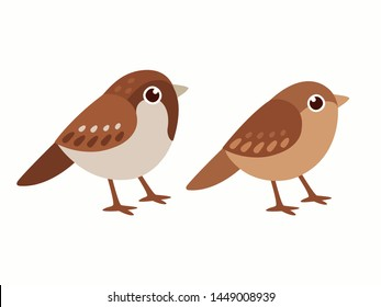 Common house sparrow couple, male and female. Small birds in cute cartoon style. Isolated vector clip art illustration.