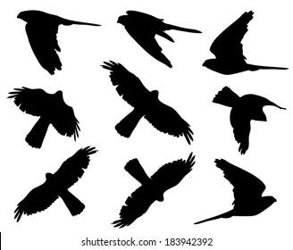 Common Kestrel in flight silhouettes