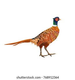 Common pheasant. Side view. Vector illustration isolated on white background