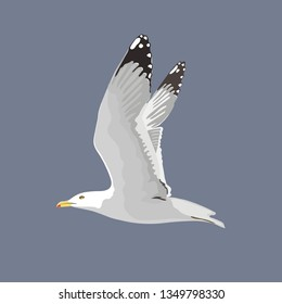 The common seagull mew gull European herring gull. Vector illustration. Element for your design. Flying bird, white feathers,