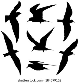 Common Tern in flight silhouettes