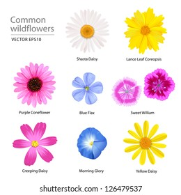 Common wildflowers, vector image. Hand drawing without any computer automatic trace.