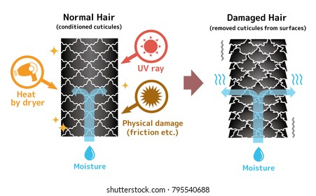 Comparison illustration of healthy hair and damaged hair.