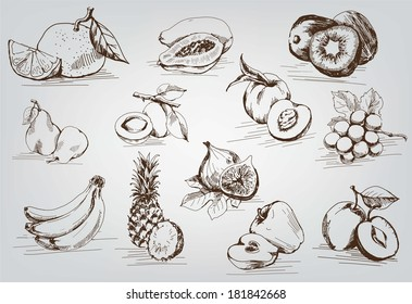 compilation of vector sketches of fruit