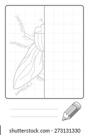 Complete the Symmetrical Drawing: Fly (single page drawing task)