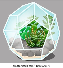 Composition in the form of a glass terrarium multi-faceted forms with stones and growing mini succulents garden isolated on grey background. Vector cartoon close-up illustration.