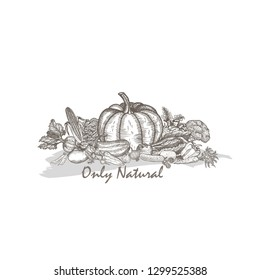 The composition of natural vegetables. Graphic vector drawing.