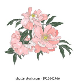 Composition of peony flowers on a white background, vector illustration