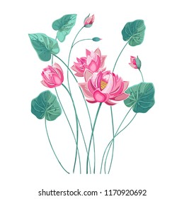 Composition of pink lotus flower with green leaves in hand drawn style pastel colors.Vector lily, waterlily isolated on white background