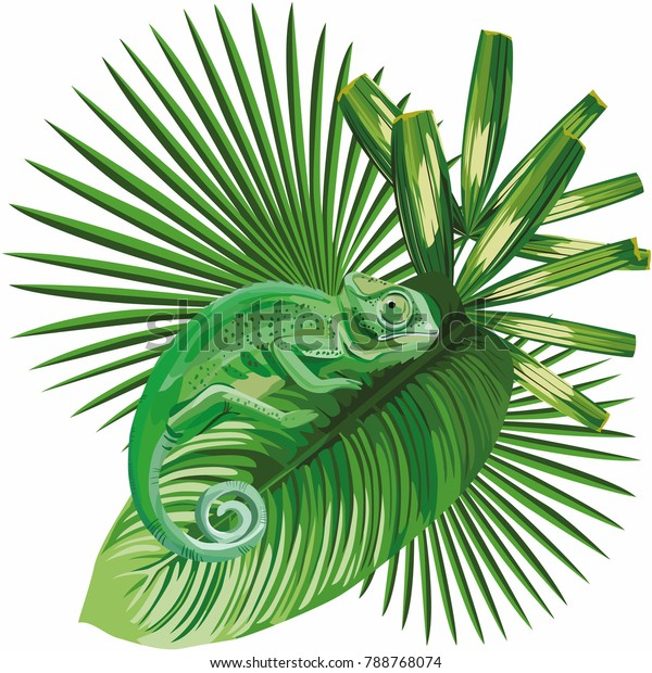 Composition vector lizard chameleon on the tropical leaves white background