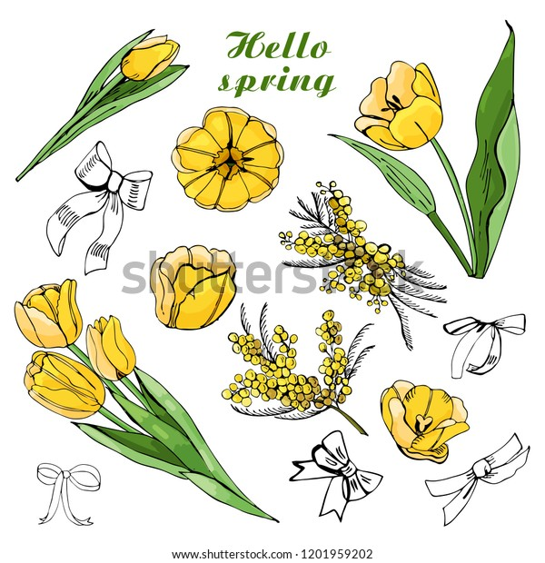 Composition with yellow tulip bouquets, flowers, leaves and bows isolated on white background. Hand drawn colored illustration.
