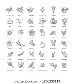 Condiment and herbs icons set. Outline set of condiment vector icons
