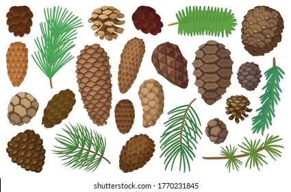 Cone pine isolated cartoon set icon. Vector illustration spruce pinecone on white background. Vector cartoon set icon cone pine.
