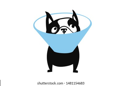 Cone of Shame Boston Terrier Dog