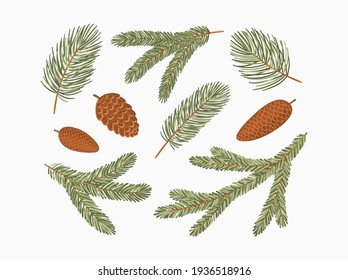 Conifer branches vector illustration set. Pine, spruce, fir tree branches and cones, winter nature clipart