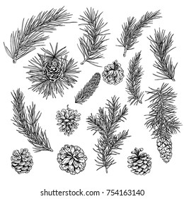 COnifer, fir, cones, winter decoration elements, hand drawn engraved illustration