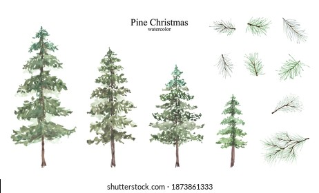 Conifer and pine branches watercolor isolated set