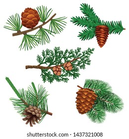 Conifer pine tree cone set with colourful isolated images of coniferous twigs with fir needle foliage vector illustration