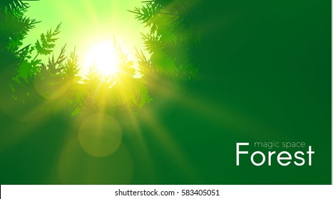 Coniferous Forest Background with Shining Sun. Woods Sunrise. Nature Space. Wild Sunset. Vector illustration