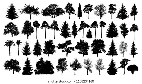 Coniferous forest. Trees set silhouette. Isolated tree on white background
