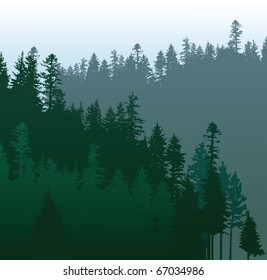 coniferous forests