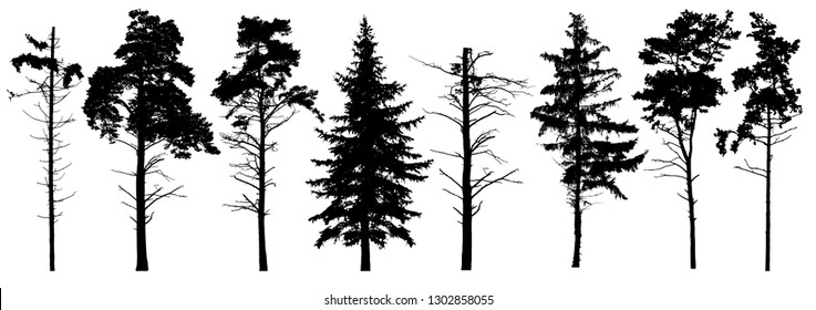 Coniferous set evergreen tree with branches knots sticks in winter. Forest trees silhouette. Isolated vector set. Christmas tree, cedar, fir-tree, pine, pine-tree, Scotch fir