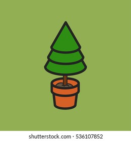 Coniferous tree in a clay pot
