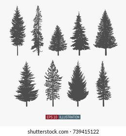 Coniferous tree isolated silhouettes set. Pine tree and fir tree flat icons. Elements for your design works. Vector illustration.