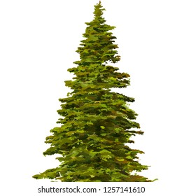 coniferous tree vector - Beautiful tree on a white background, trees illustrations. Can be used to illustrate any nature or healthy lifestyle topic, illustration with high pines in fir trees forest