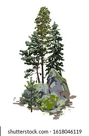 Coniferous trees among the rocks, covered with the green moss. Vector natural illustration isolated on white background