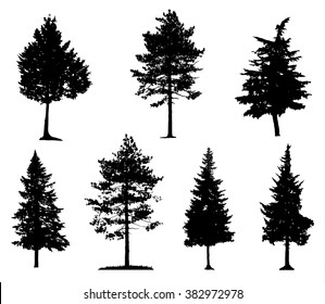 Coniferous Trees Silhouettes