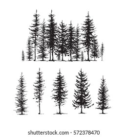 Conifers sketch set, hand drawing graphic forest, isolated vector illustration, silhouette elements black and white