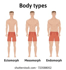 Constitution of human body. Man body types. Endomorph, ectomorph and mesomorph. Athletic young men in shorts. Vector illustration, isolated on white background.